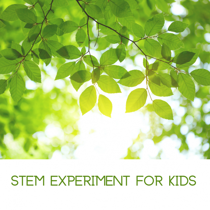 How do plants breathe- Photosynthesis STEM experiment for kids