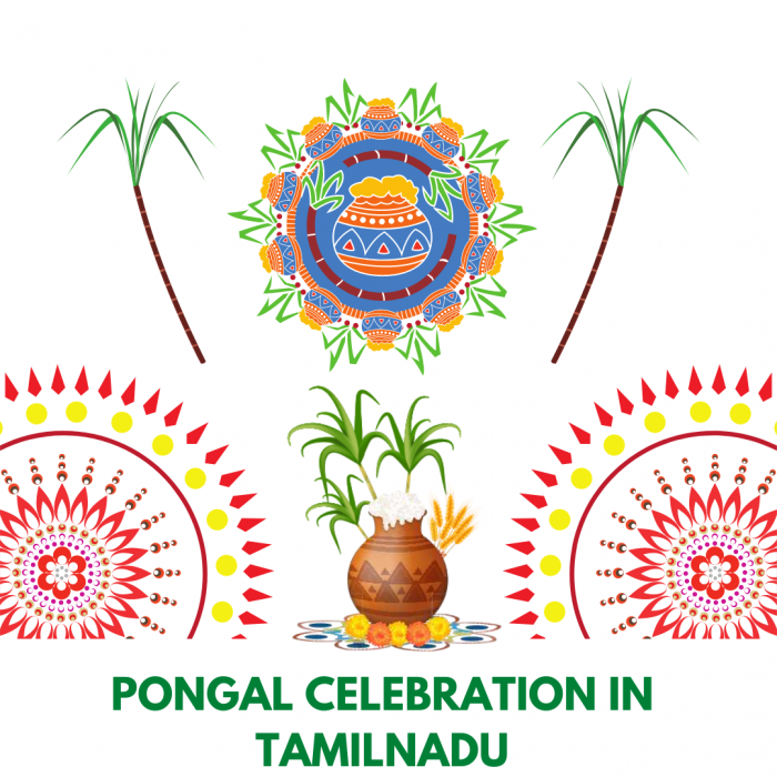 How do we celebrate Pongal in Tamil Nadu? – Harvest festival of India