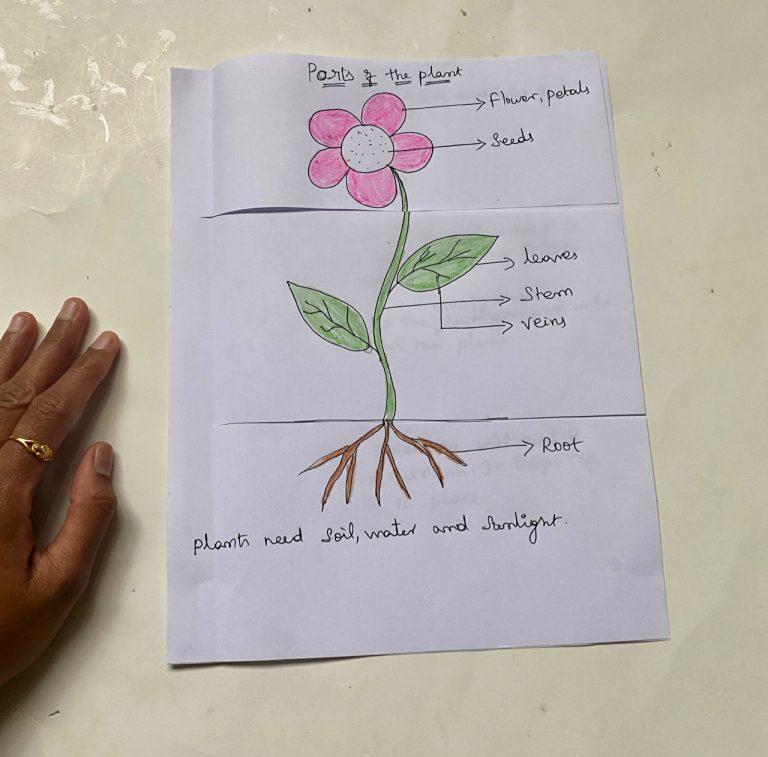 Plant study for preschool kids