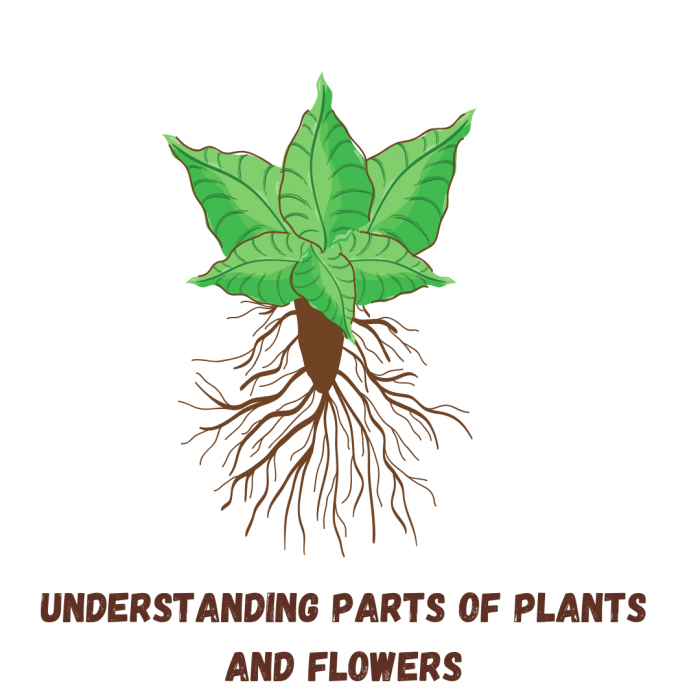 How to teach Plant study to preschool kids?